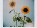 my-polaroids-7
