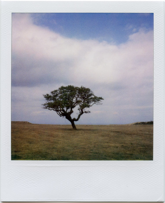 my-polaroids-8